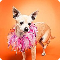 Adopt A Pet :: Sunkist (Kissy) - Escondido, CA