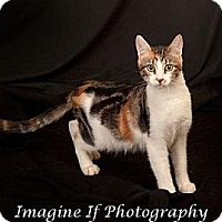 Adopt A Pet :: Snapdragon - Edmond, OK