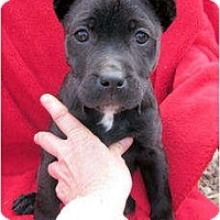 Adopt A Pet :: Christmas