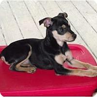 Adopt A Pet :: Jeffrey - Lexington, TN