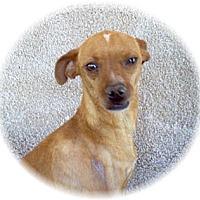 Adopt A Pet :: Monty - Tucson, AZ