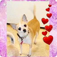 Adopt A Pet :: Sweetpea - House Springs, MO