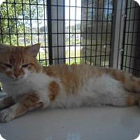 Adopt A Pet :: Lance - white settlment, TX