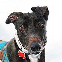 Adopt A Pet :: Kit - Ware, MA