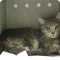 Adopt A Pet :: Ronan (foster care) - Philadelphia, PA