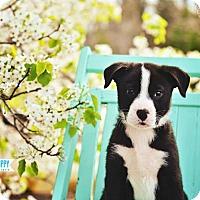 Adopt A Pet :: Sydney - Peachtree City, GA