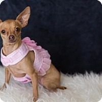 Adopt A Pet :: Abigail - Mesa, AZ