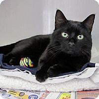 Adopt A Pet :: Bruce Willis - Cranston, RI