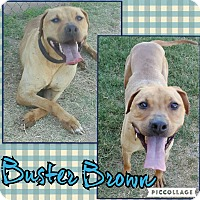 Adopt A Pet :: Buster Brown - Scottsdale, AZ