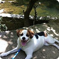 Adopt A Pet :: Max - Willingboro, NJ