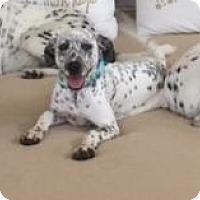 Adopt A Pet :: Ginseng - Tampa, FL
