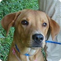 Adopt A Pet :: Sabrina - Erwin, TN