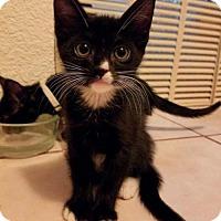 Adopt A Pet :: Teacup - Mesa, AZ