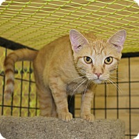 Adopt A Pet :: Peaches - Redding, CA