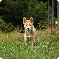 Adopt A Pet :: Kai - Newark, DE