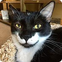 Adopt A Pet :: Jimmy Gooch - Edmond, OK