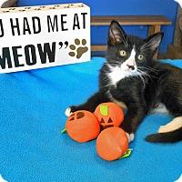 Adopt A Pet :: Tiberius - Glendale, AZ