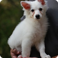 Adopt A Pet :: Boo - Wheeling, WV