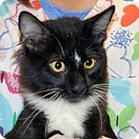 Domestic Longhair Cat for adoption in Wildomar, California - CJ