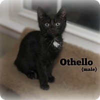 Adopt A Pet :: Othello - Glen Mills, PA