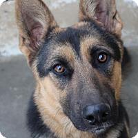 Adopt A Pet :: RYLEE - Red Bluff, CA