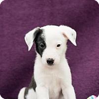 Adopt A Pet :: Stetson - Santa Fe, TX