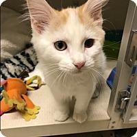 Adopt A Pet :: CIDER* - Hamilton, NJ