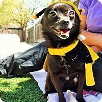 Adopt A Pet :: Romeo - Dublin, CA