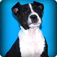 Adopt A Pet :: Titus - Glastonbury, CT