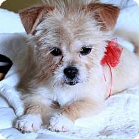 Adopt A Pet :: Sarah - Morganville, NJ