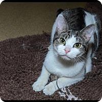 Adopt A Pet :: Bristol - Brick, NJ