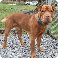 Adopt A Pet :: Hooche - Gainesville, FL