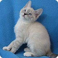 Adopt A Pet :: Xanthos - Davis, CA