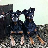Adopt A Pet :: Rolley & Polley - Port St. Lucie, FL