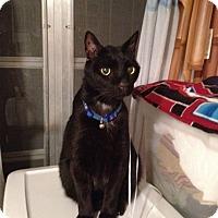 Adopt A Pet :: Saint - Miami, FL