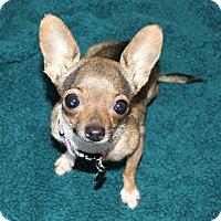 Adopt A Pet :: Annie- 2.5 lbs- Special Needs - Bellflower, CA