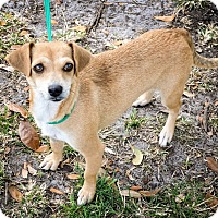 Adopt A Pet :: NayNay - Gainesville, FL