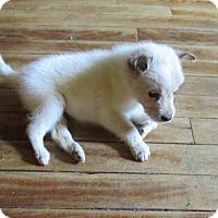 Adopt A Pet :: Chama - West Warwick, RI