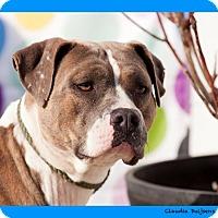 Adopt A Pet :: Ehtel - Long Beach, NY