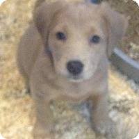 Adopt A Pet :: TESS LITTER - Pompton Lakes, NJ