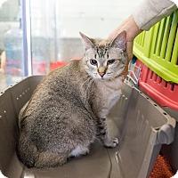 Adopt A Pet :: Lily - Montclair, CA