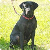 Adopt A Pet :: Violet - Minneola, FL