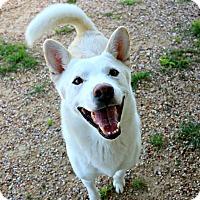 Adopt A Pet :: Tundra - Killeen, TX