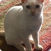Adopt A Pet :: Cujo - Houston, TX
