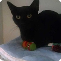 Adopt A Pet :: Midnight - Elmsford, NY