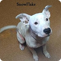 Adopt A Pet :: Snowflake - Cookeville, TN