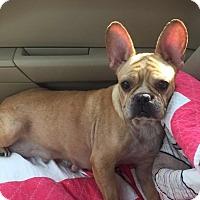 Adopt A Pet :: Bebe - Columbus, OH