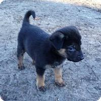 Adopt A Pet :: Weiler - Oakley, CA
