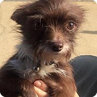 Adopt A Pet :: Chad LBM in RI - Providence, RI