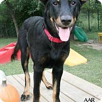 Adopt A Pet :: COWBOY - Tomball, TX